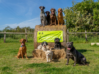 Borthwick's Boarding joins The North East Dog Festival as GSP Rescue Dog Show Sponsor.