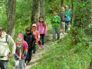 Petite balade en forêt (préparer un cours)