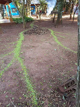 Hormigas Casa Yaguarete B&B Puerto Iguazu Argentina