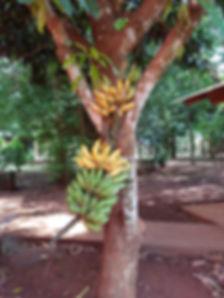 Frutas Casa Yaguarete B&B Puerto Iguazu Argentina