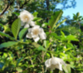 Flores Casa Yaguarete B&B Puerto Iguazu Argentina