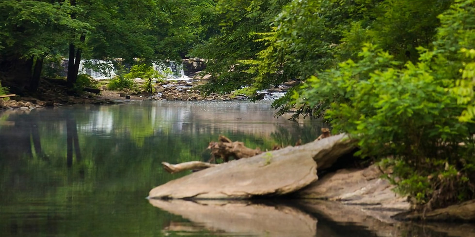 Earth Day Wildflowers and Lenni-Lenape Reflections in the Wissahickon
