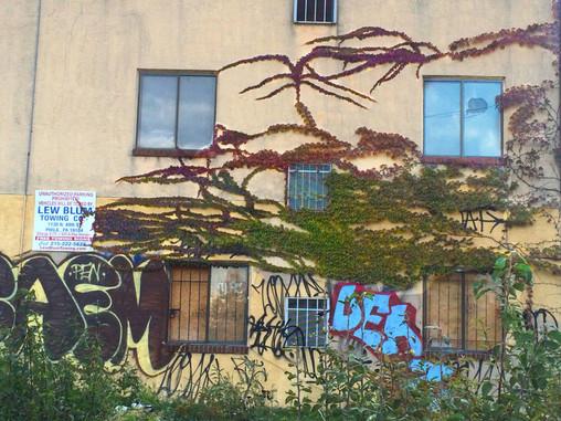 Botanical Graffiti