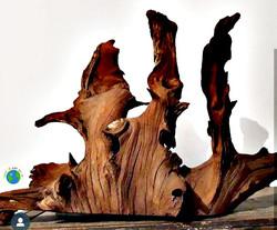 Reaproveitamento de árvore morta
