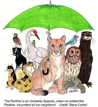 cropped umbrella.JPG