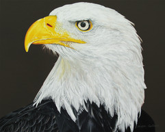 Nikita Coulombe-Eagle Calling