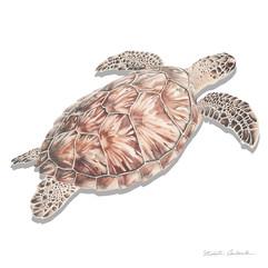 Nikita Coulombe-Sea Turtle