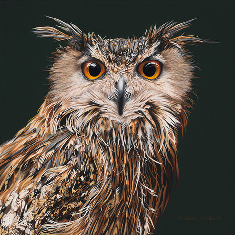 Nikita Coulombe-The Philosopher (Eagle Owl)