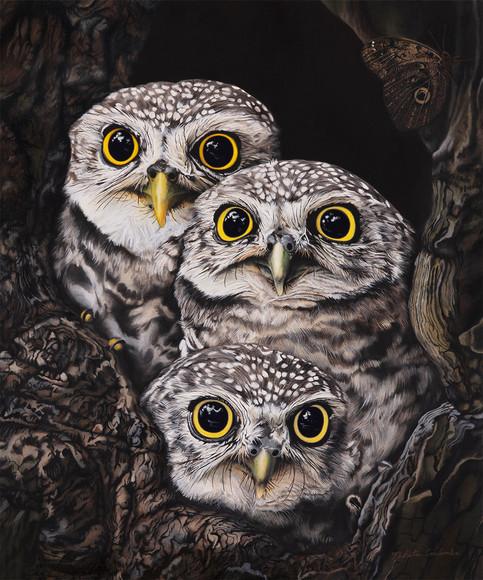 Nikita Coulombe-Three Little Owls