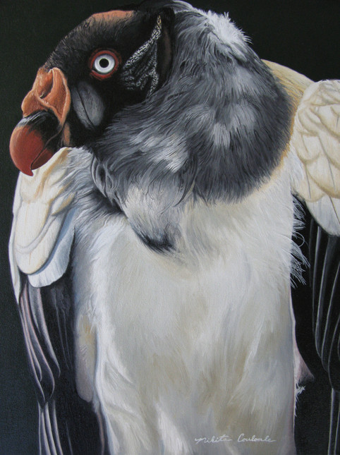 Nikita Coulombe-Vulture Study
