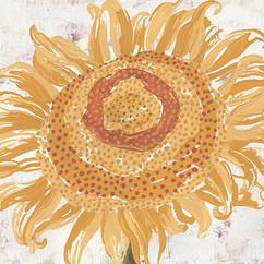 Nikita Coulombe-Sunflower II