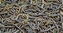 narciss-snake-pits-wtf-1600x856.jpg