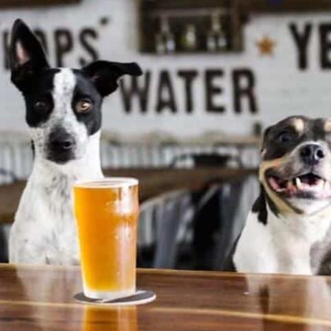 HOPS'n HOUNDS   Pup & Me Fun