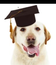 puppy school.png