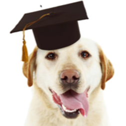 PAWSITIVE RECALL OBEDIENCE TRAINING