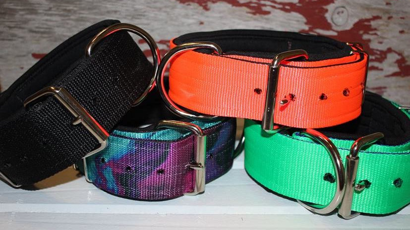 Rediscover Your Dog Collar