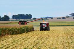 Midwest harvest