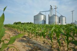 Indiana corn farming and grain bins
