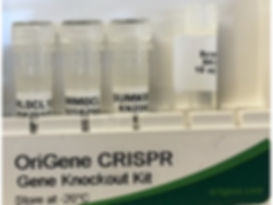CRISPR Kit