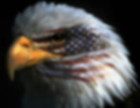 Eagle with American Flag on face