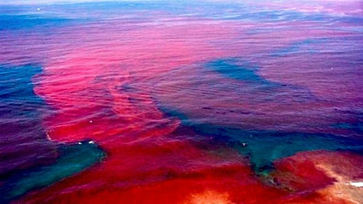 The sea will turn to blood