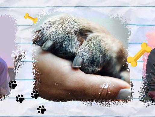 Amigos Caninos: el documental de Netflix que tienes que ver si eres un amante de los cachorritos.