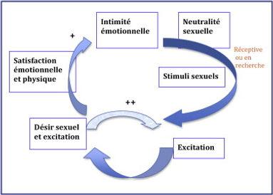 Modèle d'excitation sexuelle de Basson