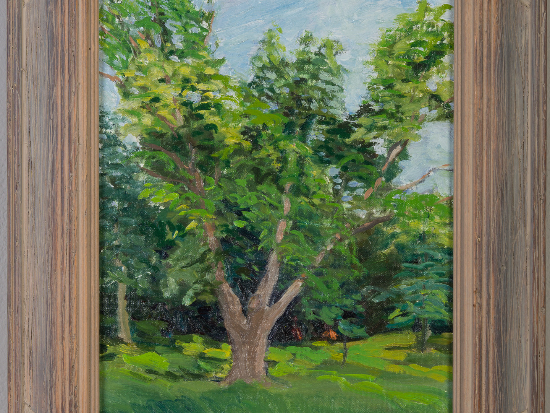 Wirth Park Tree