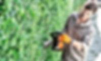 PETROL HEDGE TRIMMERS.jpg