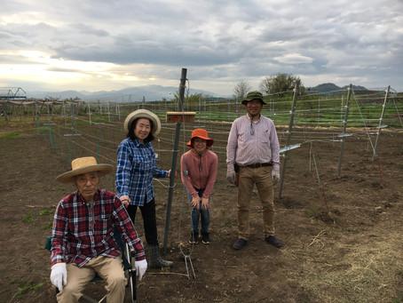 今年も何とか、新しい畑が稼働しました