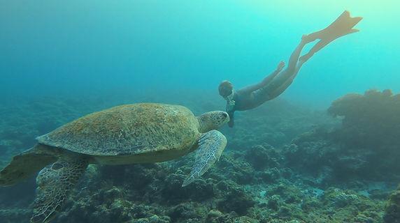 freediver with big turtle