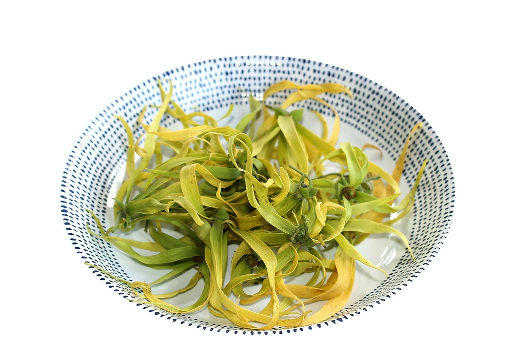 bright-yellow-ylang-ylang-flowers-in-white-dish