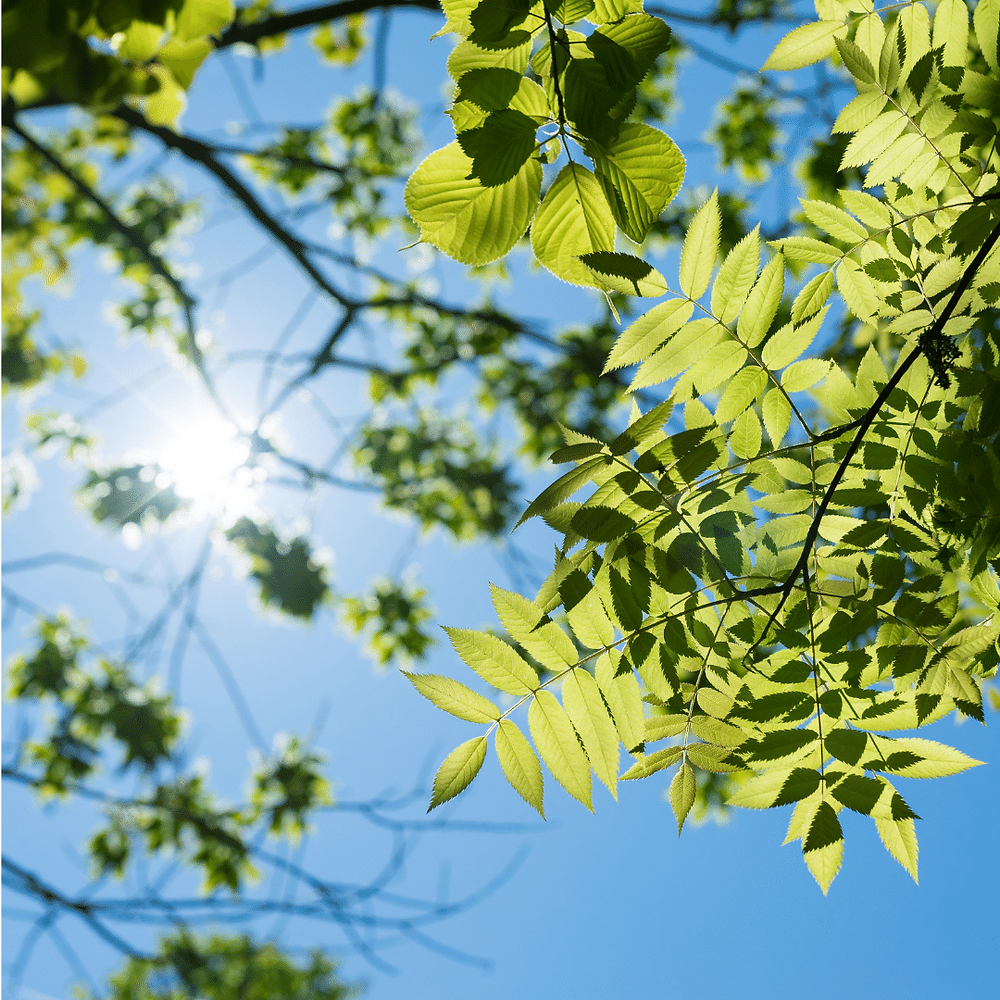blue-sky-sun-shining-down-on-tree-leaves