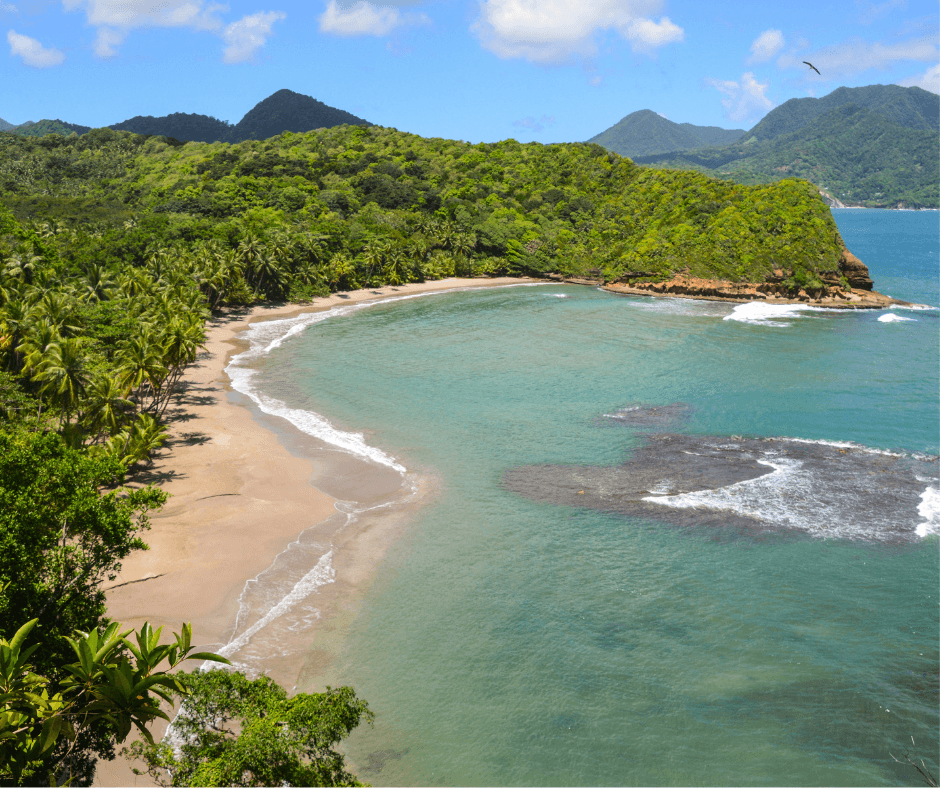 Dominica-palm-fringed-beach-and-golden-sand