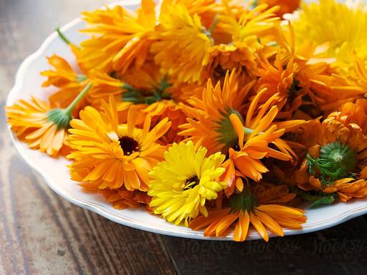 Skincare ingredient spotlight - Calendula - aka Pot Marigold