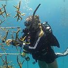divemaster internship coral.jpg