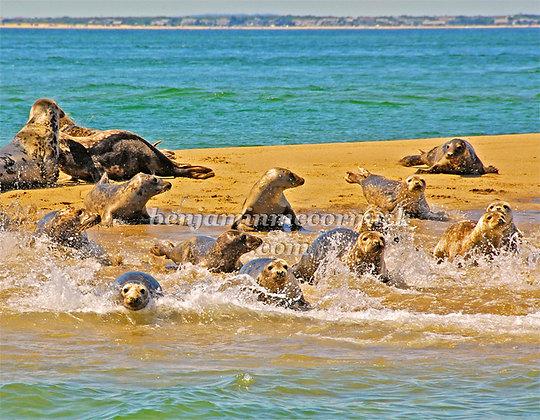 Summer Seals