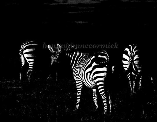 Zebras, Underexposed