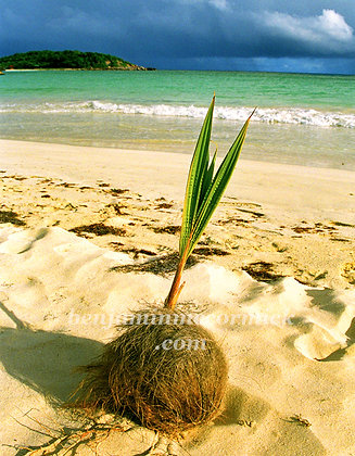 Tropical Rebirth