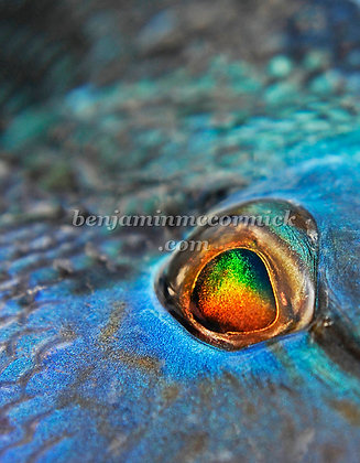 Eye of the Black Bass