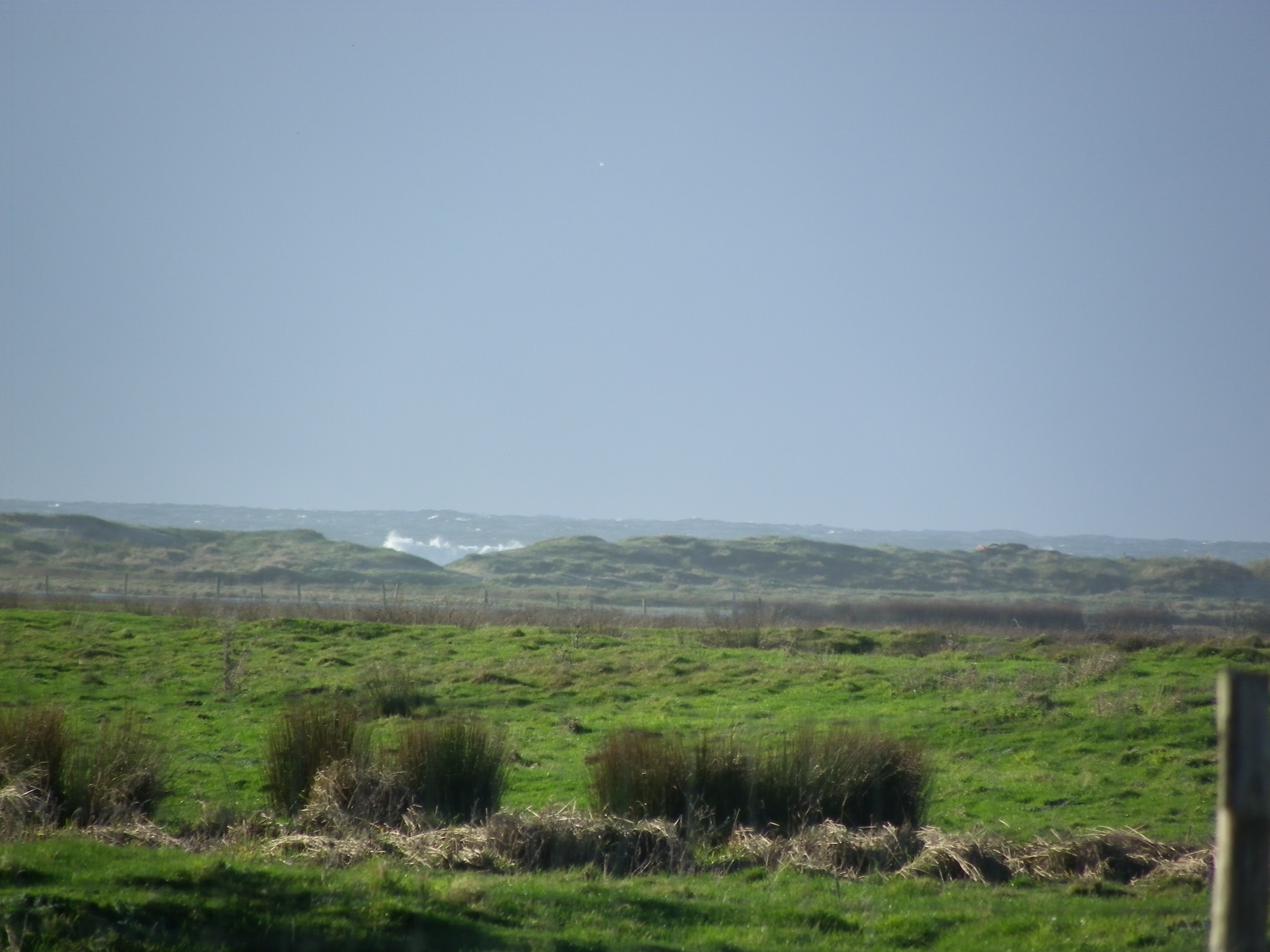 Herbage derrière la dune