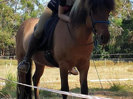 A bit of horse fun!