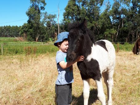 Foals, foals, foals,...