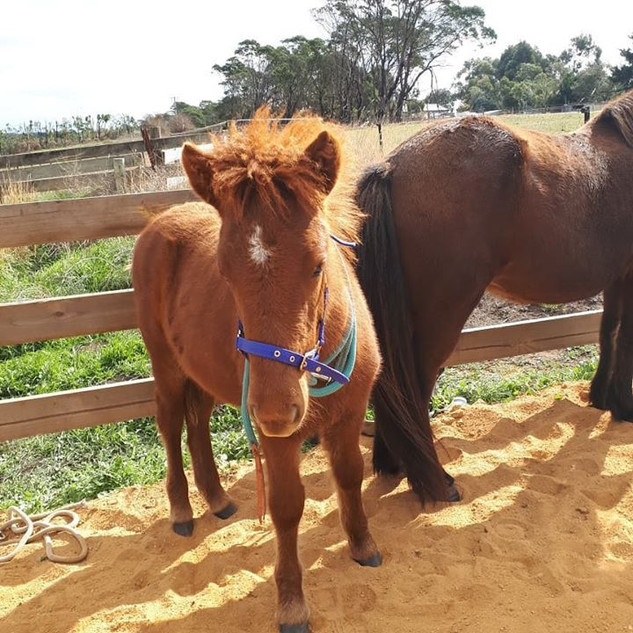 first time halter training