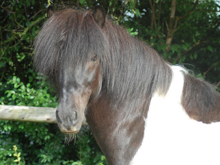 Lotto von Svada-Kol-Kir our new stallion has arrived!!