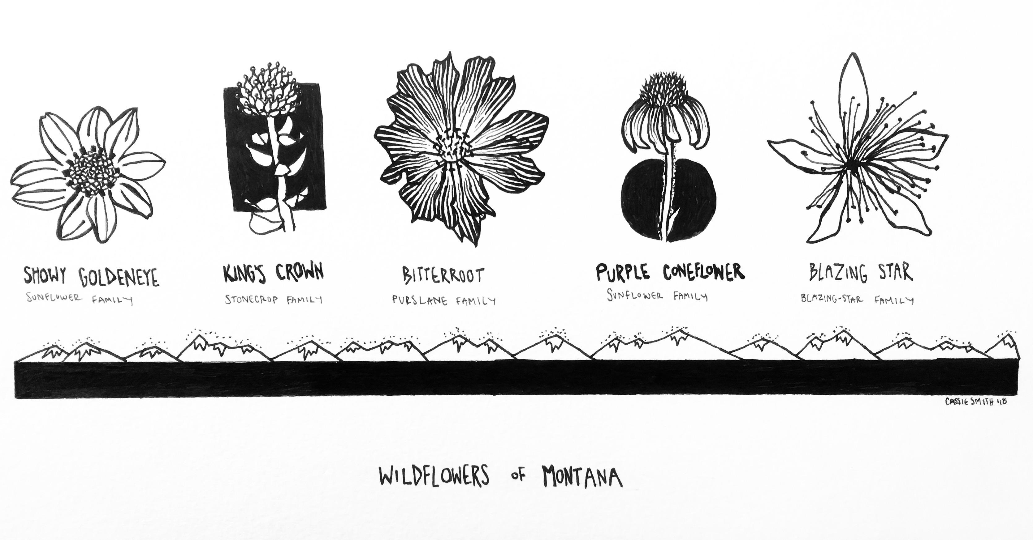 WILDFLOWERS OF MONTANA