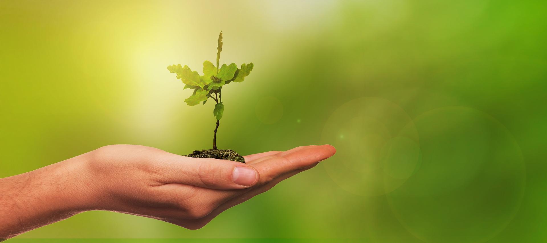 Nachhaltigkeitsprojekte