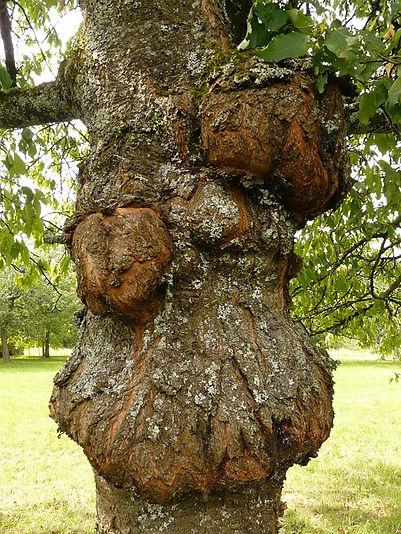 Baum Wucherung.jpg