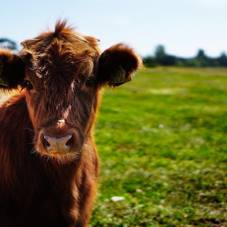 Farmers asked to express interest in sustainable farming incentive pilot