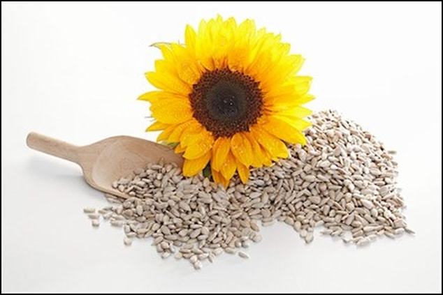 Agrophilia-Sunflower-Seeds-min